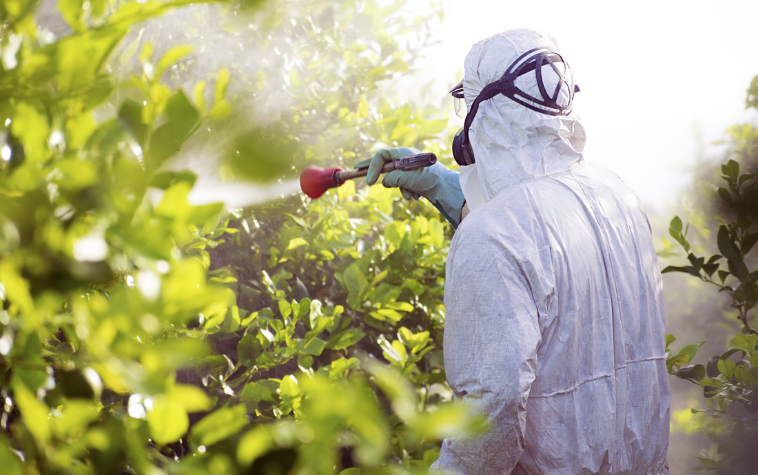 man spraying pesticides on leaves